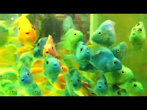 MEGA VLOG - Chennai Kolathur Ornamental Fish and Pet Market Vlog 4