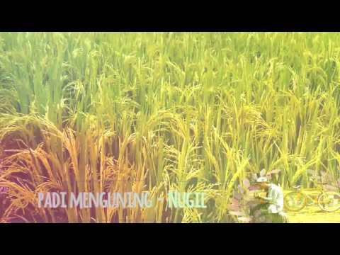 PADI MENGUNING - Nugie