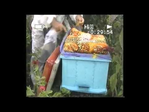 Обработка пчел бисанаром с помощью шприца
