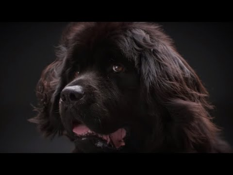 Why do dogs bark? | Secret Life of Dogs | Earth