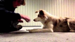 Puppy 101 Teaching Self Control