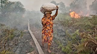 Indonesia Rainforest Fire Global Emergency For Palm Oil
