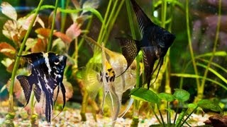 How To Clean Algae From A Fish Tank | Aquarium Care