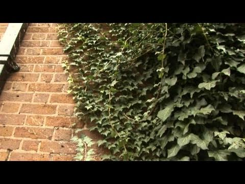 How To Remove Ivy
