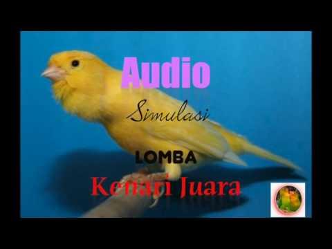 Audio Simulasi Lomba - Burung KENARI - Melatih Menjadi KENARI JUARA