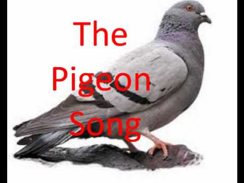 The Pigeon Song