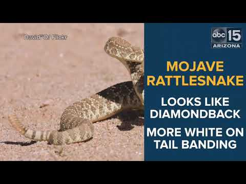 Seen them? 7 most common venomous snakes in Phoenix - ABC15 Digital