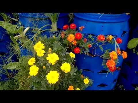 copetes flores fundamentales para la huerta organica
