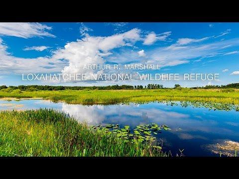 Arthur R Marshall Loxahatchee National Wildlife Refuge