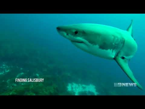 Esperance Sharks | 9 News Perth