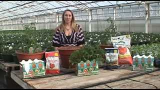 Uncle Mike's Tomato Garden -  Easy Garden In A Box - How To Growing Tips