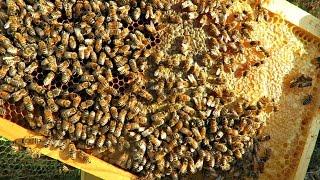 Beekeeping Hive Inspection Update