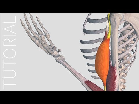 Muscle Motion - Complete Anatomy