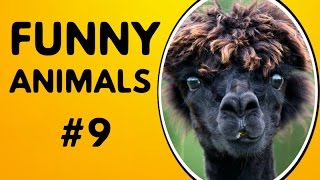 Funny animals 2017 funniest videos   funny animal compilation #9