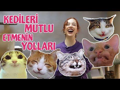 Kedinizi Mutlu Etmenin 10 Kolay Yolu