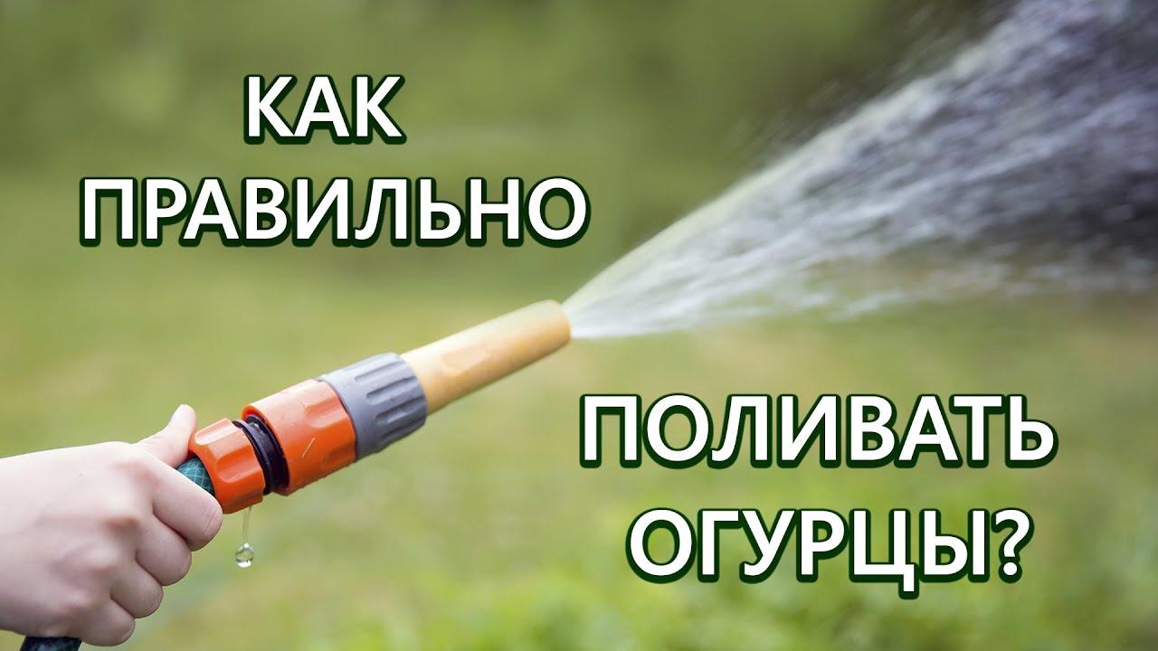 Как правильно поливать огурцы? Все о поливе огурцов!