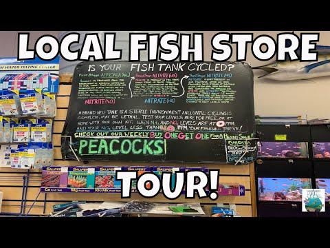 LOCAL FISH STORE TOUR SANDY'S PET STORE