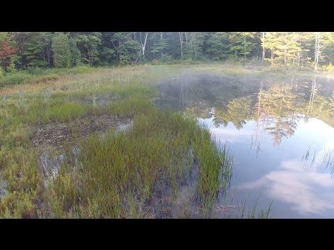 Massachusetts Audubon Society Overview Video