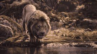 Le Roi Lion (2019) - Êtes-vous prêts pour Le Roi Lion ? | Disney