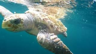 May 2016 ROV Turtle Summary