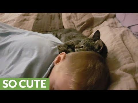 Kitten preciously bonds with little boy