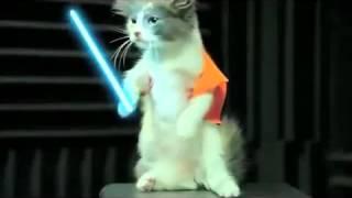 Коты гамают в Star Wars