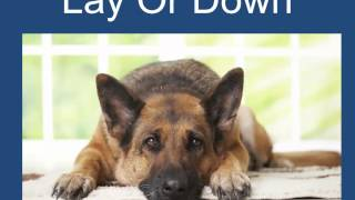 Obedience Training For Dogs Free 101 Dog Training Tips