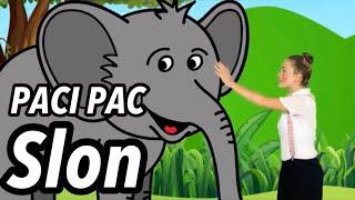 PACI PAC Slon z DVD PACI PAC 2