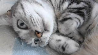 送料無料にするため大量の猫ご飯をネットで買った…食べるかどうか不安…...