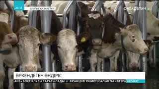 Шығыс Қазақстан облысындағы сүт зауыттарының өндірістік қуаты күшейіп келеді