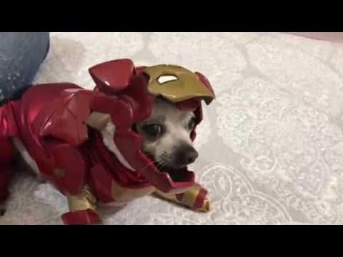Kat - Iron Dog to the Rescue