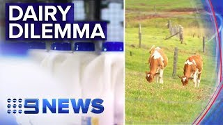 Foreign owned milk companies awarded contracts in QLD | Nine News Australia