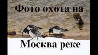 Фотоохота на Москва реке
