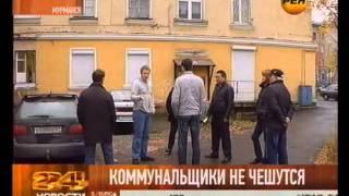 Мурманск атакуют блохи!