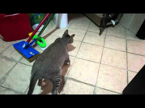 Crazy cats funny playing & fighting over cat carrier - Slim Shady & Mimi 4K UHD