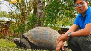 Born to Be Wild: Doc Nielsen's close encounter with giant tortoises
