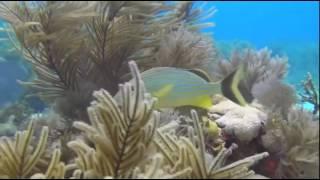 Дикая природа  Удивительный мир морских глубин Багамских островов