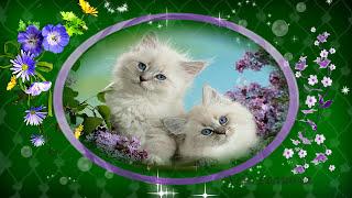 Привет Весна!  Кошки и Весна Самое красивое видео про весну