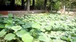 Chiều Mưa Xứ Dừa- Quốc Tuấn