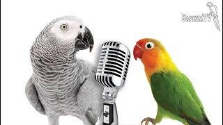 Jakie papugi można nauczyć mówić? - 4 reguły