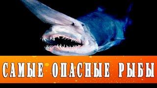 Топ 5 самые большие и опасные рыбы в мире