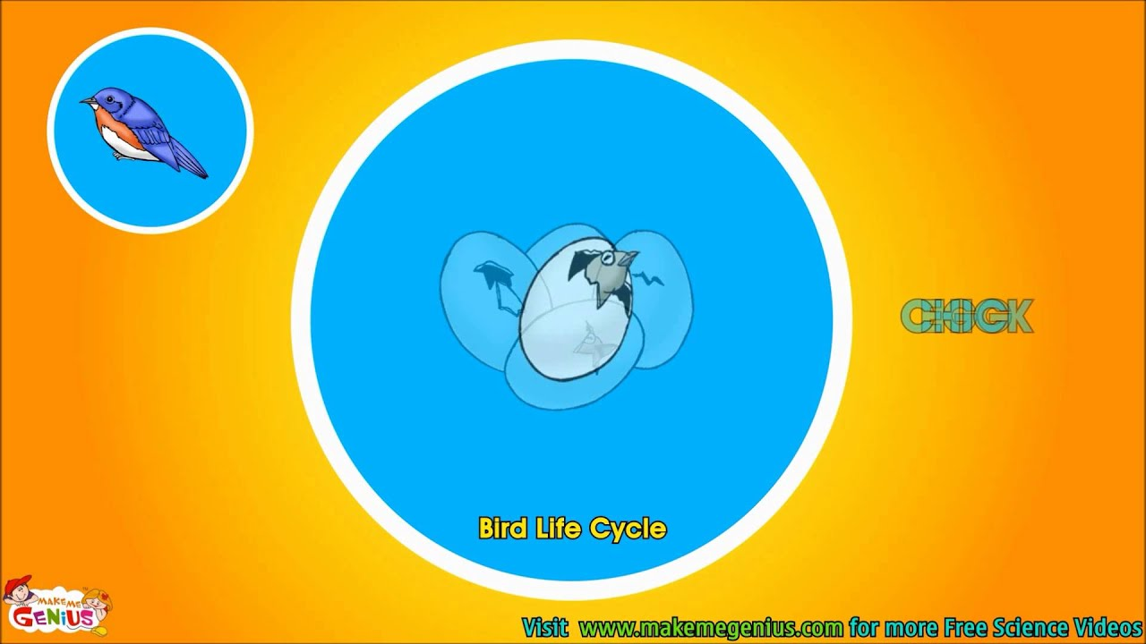bird life cycle diagram solar energy flow video for kids science by makemegenius com