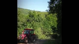 orman kiralı