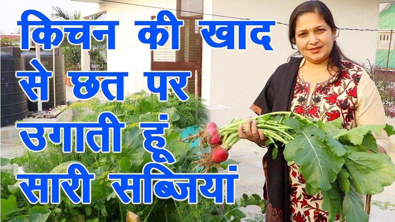 Download किचन की खाद से छत पर उगाती हूं इतनी अच्छी सब्जियां || kitchen Gardening with kitchen compost