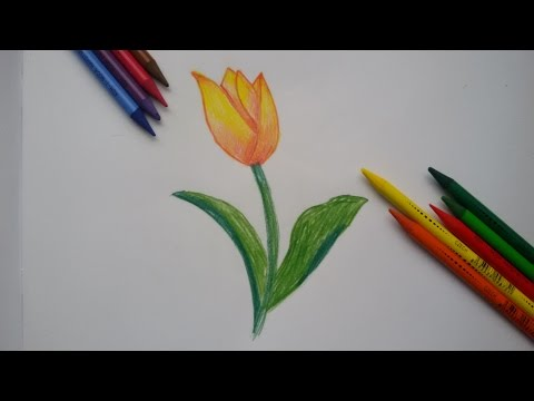 Как нарисовать птицу поэтапно Рисунки птиц карандашом