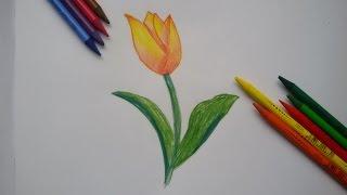 Как нарисовать тюльпан. Рисуем цветы.(В этом видеоуроке вы увидете, как нарисовать тюльпан., 2016-01-17T14:26:06.000Z)