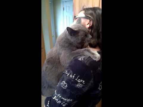 18lb Russian blue acts like toddler