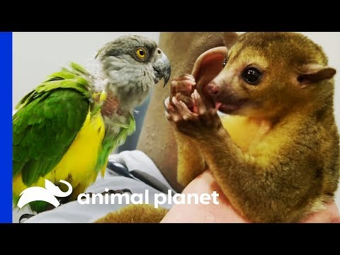 Two Exotic Pets Get Expert Treatment From Dr Ross   The Vet Life