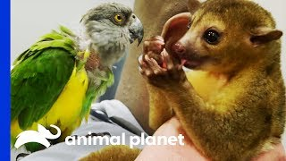 Two Exotic Pets Get Expert Treatment From Dr Ross | The Vet Life