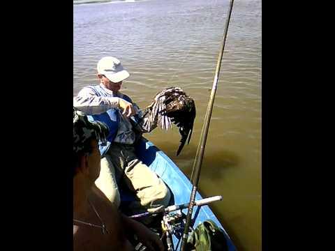 Рыбалка в качалино на дону